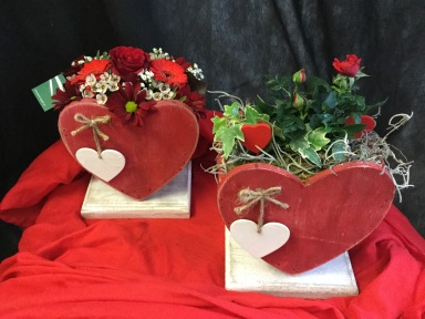 Valentinstagspflanzen