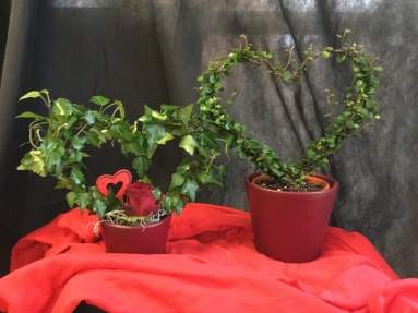 Valentinstag Topfpflanzen