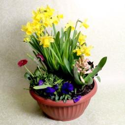 Blumen Schale Saisonpflanzen Frühling