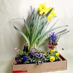 Überraschungsbox mit Saisonpflanzen