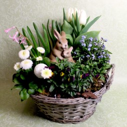 Frühlingskorb Saisonpflanze
