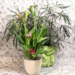 Grünpflanzen Überraschung