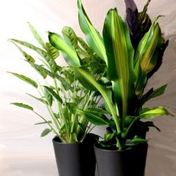 2. Grünpflanze