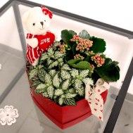13. Schachtel love mit Zimmerpflanzen klein 28.- Fr.